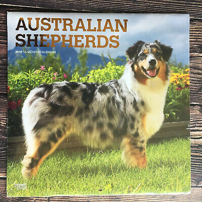 $7.95 • Buy 2019 Australian Shepherds Wall Calendar By BrownTrout 16 Month Calendar Sealed