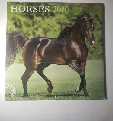$5 • Buy 2020 Horses Calendar Includes 2019 And 2021 4 Month Calendars