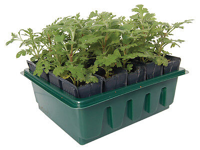Compact Rootrainers Set Frame + Lid + Books Root Trainers Propagator Seeds  • 9.95£