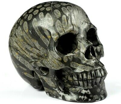 $39 • Buy Huge 5.0  CORAL FOSSIL Carved Crystal Skull, Realistic, Crystal Healing