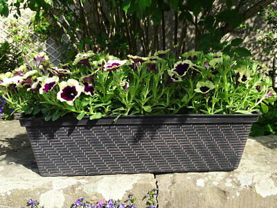 2x Large Long Plastic Trough Window Box Planter Herb Flower Box Home Garden 53cm • 13.95£