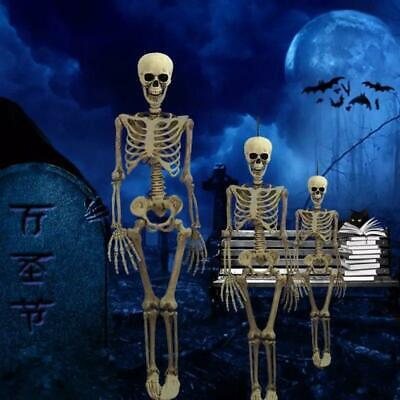 $ CDN37.58 • Buy Halloween Prop Skelton Human Body Poseable Anatomy Model Party Decoration