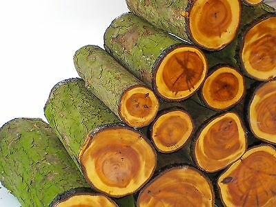 One English Yew Wood Turning Log Blank.  200 Or 300mm (8 Or 12 ) Long • 10.95£