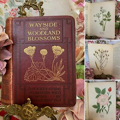 Wayside And Woodland Blossoms Step 1907 VOLUME I Vintage Illustrated Flower Book • 24.99£