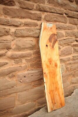 Yew Board With Burrs Ref R208 • 36£
