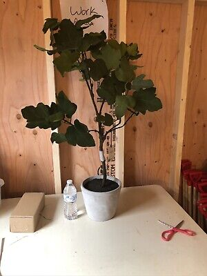 $20 • Buy Hearth & Hand With Magnolia Artificial Plant