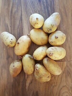 Baby Potato Seeds, 12 PCS Ready For Planting. • 9.99£