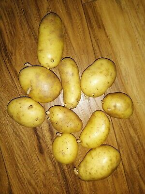 10 Pcs Baby POTATO SEEDS - GROW YOUR OWN HYBRID FROM SEEDS • 4.99£