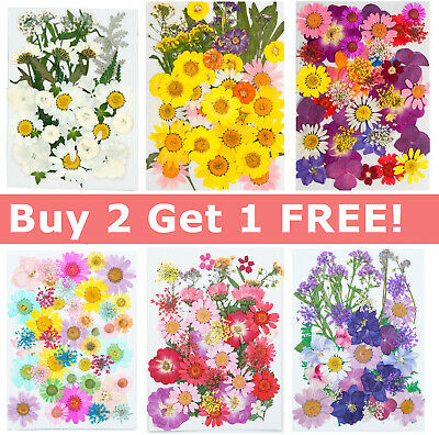 AU11.95 • Buy 35-42PCS Real Dried Flowers Pressed Leaves For Epoxy Resin Jewelry Making DIY AU