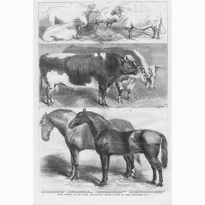 £12.95 • Buy LEEDS Prize Animals At The Royal Agricultural Society Show - Antique Print 1861