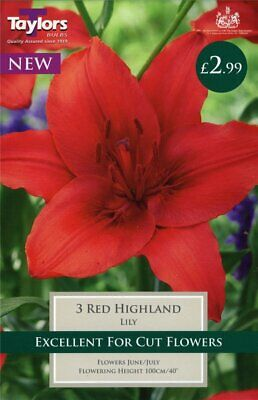 Taylors 3 X Lily Red Highland Bulbs (1 Packet) • 2.99£