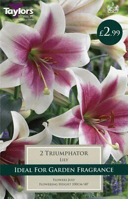Taylors 2 X Lily Triumphator Bulbs (1 Packet) • 2.99£