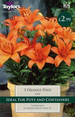 Taylors 3 X Lily Orange Pixie Bulbs (1 Packet) • 2.99£