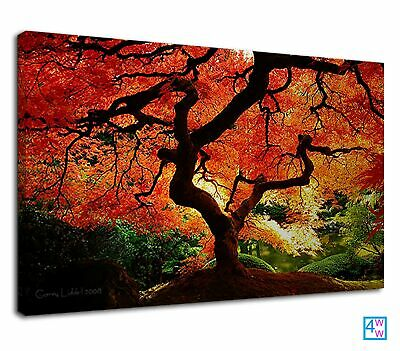 Autumn Tree With Orange Leaves Beautiful Nature Canvas Print Wall Art Picture • 38.99£
