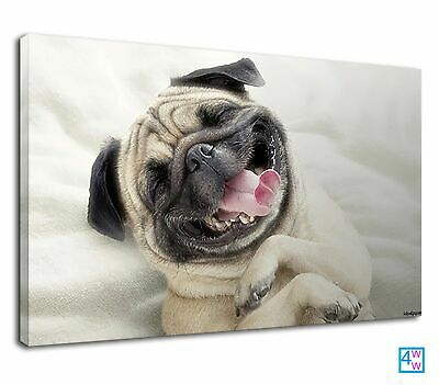 Smile Of Funny Cute Pug Baby For Bathroom Canvas Print Wall Art Picture • 38.99£