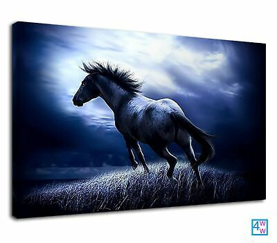 $54.19 • Buy Majestic White Horse In The Moonlight Equestrian Canvas Print Wall Art Picture