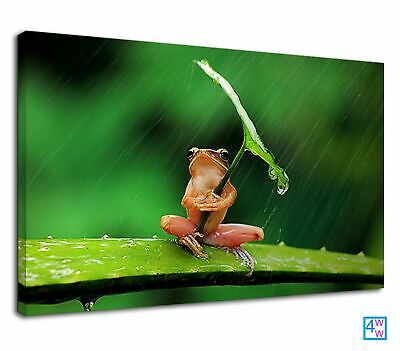 Frog Using Leaf As Umbrella For Bathroom Canvas Print Wall Art Picture • 38.99£