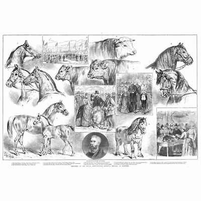 £16.95 • Buy NORWICH Scenes At The Royal Agricultural Society Show - Antique Print 1886