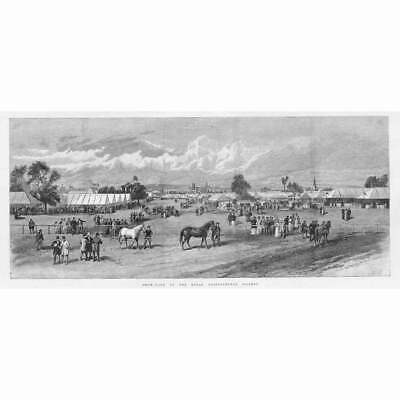 £14.95 • Buy CHESTER Show Yard Of The Royal Agricultural Society - Antique Print 1893