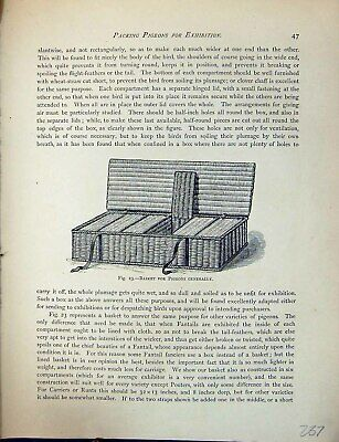 £17 • Buy Old Antique Print Birds Fulton Wright C1880 Pigeon Basket Carrying Box 19th