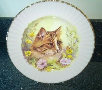 £14.99 • Buy Royal Vale Bone China Cat Plate 10 Inches Decorative Use Made In England