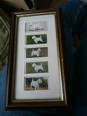 £3.50 • Buy SMALL FRAMED  GRANDEE  CIGAR  CARDS  WESTIE DOGS .7 ×12 .Selling For Dog Rescue.