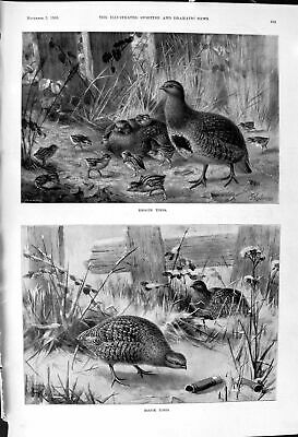 £20 • Buy Old 1900 Baby Birds Hunting Grouse Hilda Charlotte Thorp Horse Search Victorian