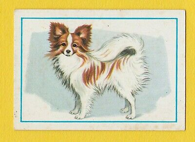 £4 • Buy Dogs - Spanish Trade Trading Card Circa 1977 #62 Papillon - Butterfly Dog