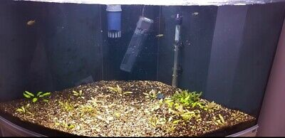 £250 • Buy Corner Tropical Fish Tank 350ltrs. Great Condition. Fish And Plants Included