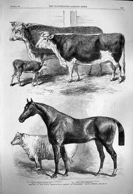 £16 • Buy Old Antique Print 1863 Royal Agricultural Society Worcester Horse Cattle 19th