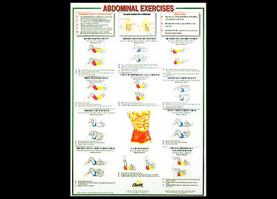 Professional Fitness Wall Chart ABDOMINAL EXERCISES Abs Workout Wall Poster • 13.81£