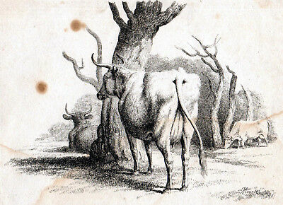 COWS IN FIELD 1801 Samuel Howitt  ANTIQUE ETCHING #1 • 25£
