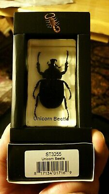 $12.99 • Buy Unicorn Beetle Real Insect PAPERWEIGHT Entomology Bug Taxidermy Resin NIB MB82