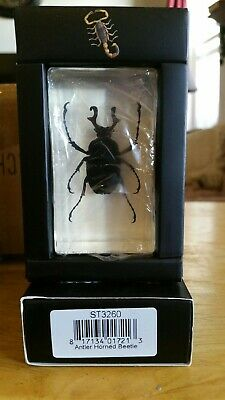 insect resin
