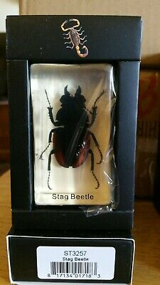 $12.99 • Buy Stag Beetle Real Insect PAPERWEIGHT Entomology Bug Taxidermy Resin MB92 Stocking