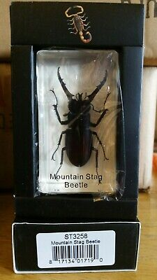 $12.99 • Buy Mountain Stag Beetle Real Insect PAPERWEIGHT Entomology Bug Taxidermy Resin MB92