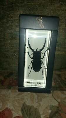$14.89 • Buy Mountain Stag Beetle Real Insect PAPERWEIGHT Entomology Bug Taxidermy Resin MB96