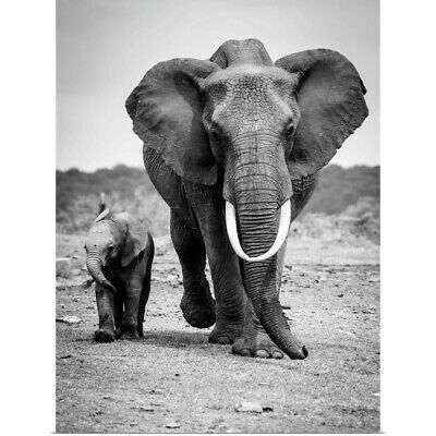 $49.99 • Buy  Mother And Elephant Calf  Poster Print