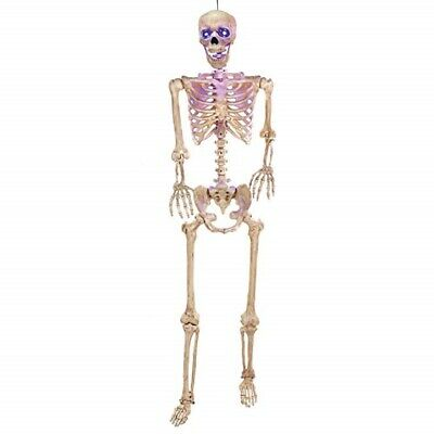 $49.95 • Buy 5' Life Size Poseable Skeleton Lights-Up Scary Prop Horror Haunted House Bones