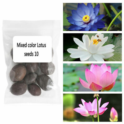 $ CDN4.43 • Buy 10Pcs Bowl Lotus Flower Seeds Water Lily 6 Kinds Beautiful Bonsai Plants Water