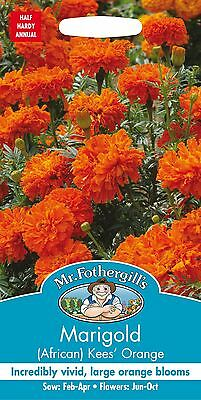 Mr Fothergills - Flower - African Marigold Kees Orange - 75 Seeds • 2.40£