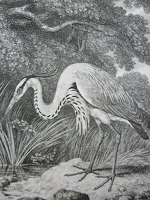 SAMUEL HOWITT (1756-1822) - Early 19th Century Etching - HERON • 5£