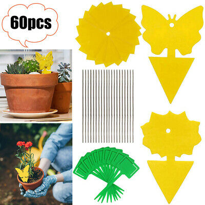 AU15.35 • Buy Sticky Trap Fruit Fly Fungus Gnat Killer Bugs Traps Indoor Outdoor Catcher