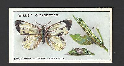 £1 • Buy Wills - Garden Life - #7 Large White Butterfly, Larva And Pupa