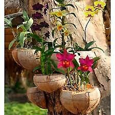 £10.06 • Buy Natural Pure & Fresh  Coconut Shell Cover For Orchids