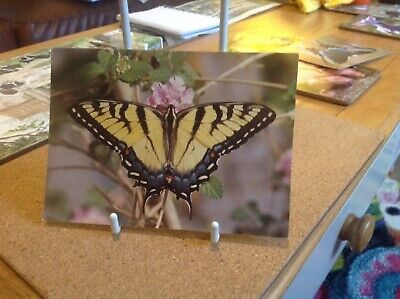 Tiger Swallowtail Butterfly Postcard • 0.99£
