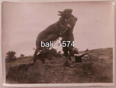Original Ww1 Real Photo Gallipoli - Transport Mule & Allied Handler • 19.95£
