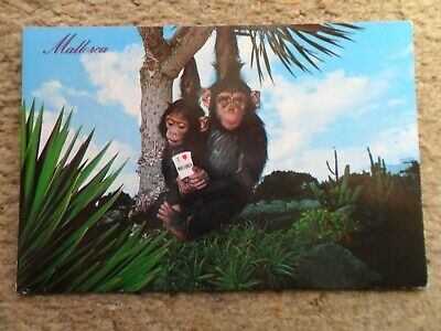 . Postcard.    Mallorca Spain.   Posted To Blackpool 16.6.1989. • 0.90£