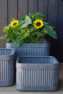 Set Of 3 Galvanised Dolly Tub Planters Herbs Plants Flowers Antique Style Pots  • 89.99£