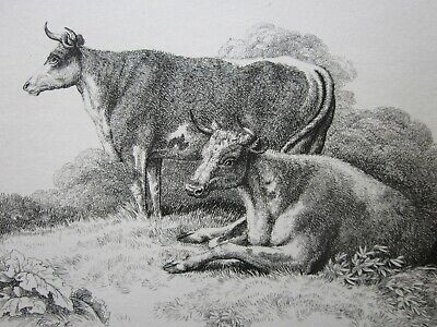 £5 • Buy 4 Early 19th Century ANTIQUE Etchings, SHEEP & CATTLE Etc.. By SAMUEL HOWITT